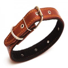 Collars & Leads